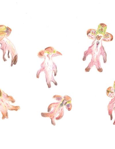 Dessin botanique grenoble croquis orchidée