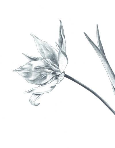 illustration naturaliste grenoble